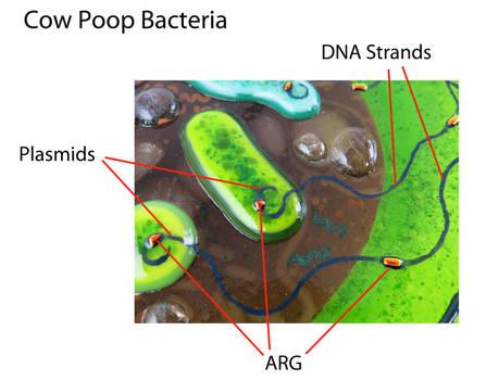 Antibiotic Resistance Genes in Cow Manure Glass