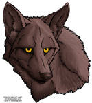 colored coyote face -- free