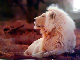 White lion by Brsinger