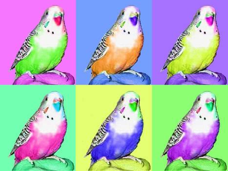 Parakeet - Wallpaper Version