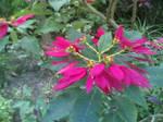 Flower-f by noemi38