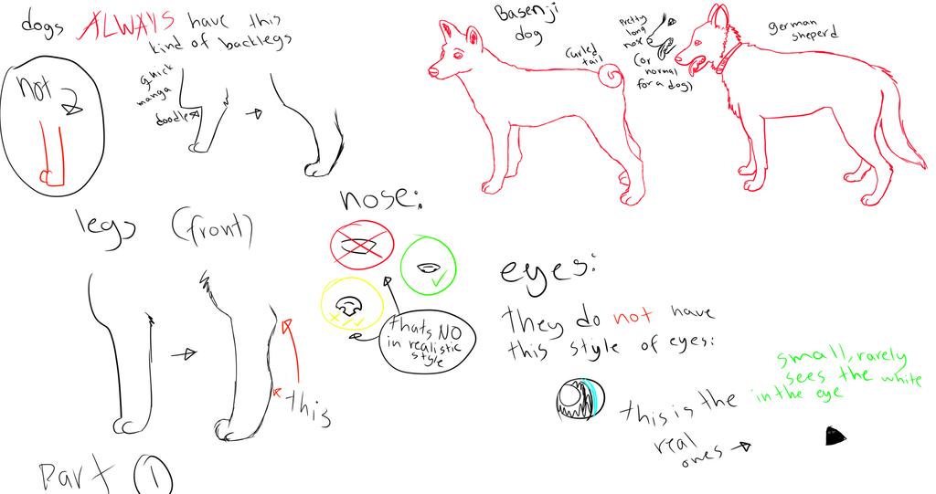 Realistic dog anatomy help by Punk-Mutt on DeviantArt