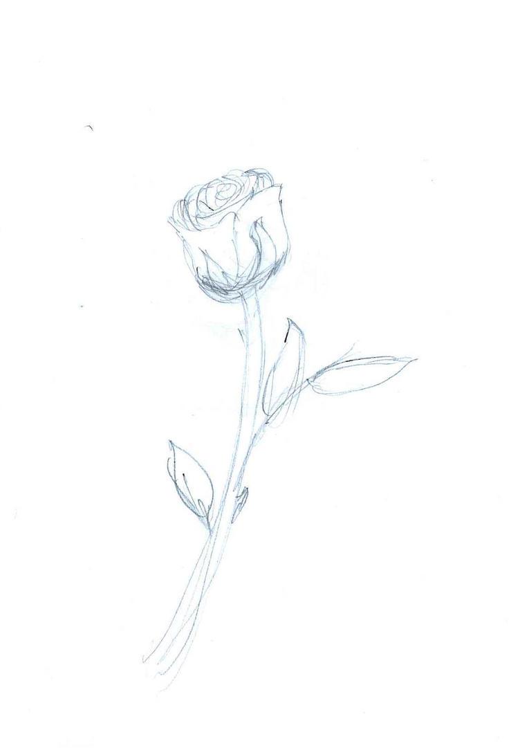 Rose by Alohomora12