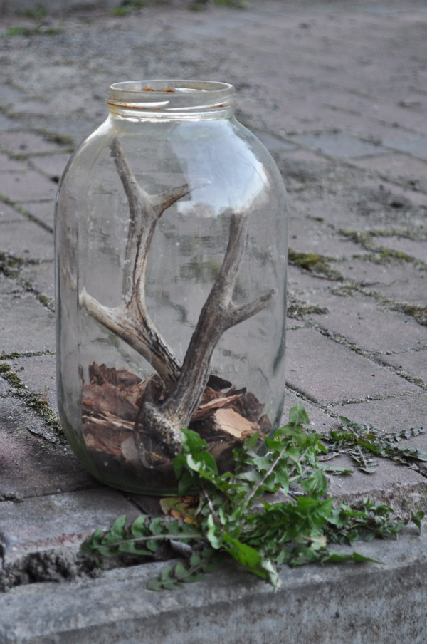 Forest in the jar by Ddevil-is-so-lovely