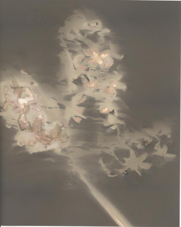 Hyacinth Lumen by JanineKeat