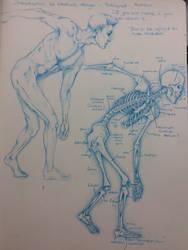 Anatomy skeletal by Assink-art