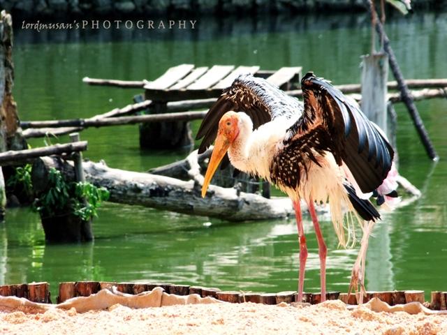 At Zoo Negara Malaysia 3 by lordmusan