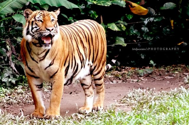 At Zoo Negara Malaysia 15 by lordmusan