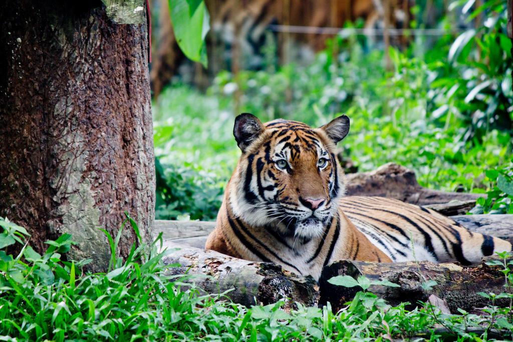 In Captivity at Zoo Negara, Malaysia by lordmusan