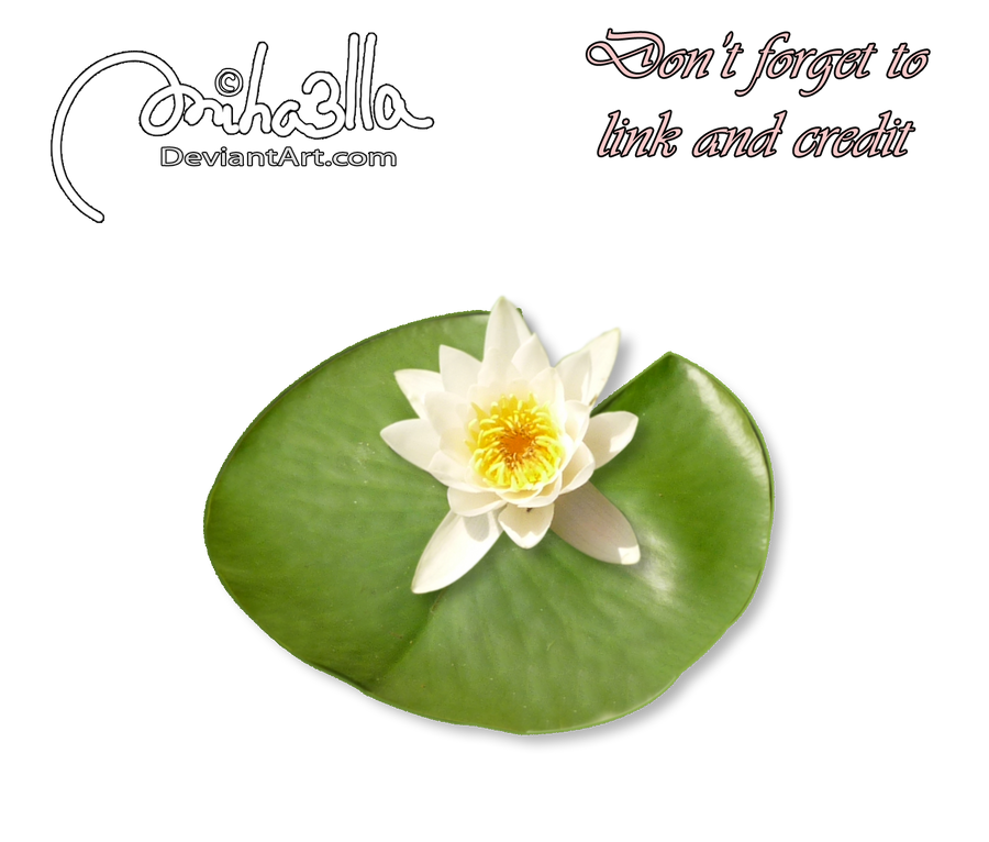 Water Lily precut stock by Miha3lla