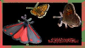 3 HQ butterflies stock