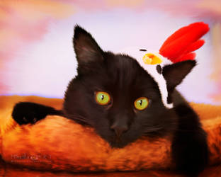 Chicken cat by Miha3lla