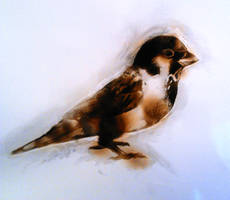 Fire Drawing- Sparrow