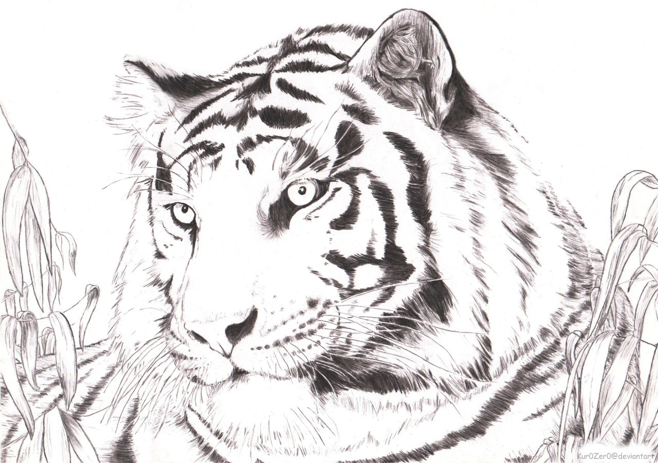 Black And White Tiger by Kur0Zer0 on DeviantArt