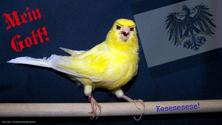 Gilber...Gilbird? Face Swap