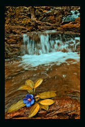 dreamy flower by yalanand