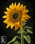Sunflower for a Lady by VonStreff