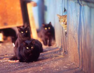 Gang of cats by erynrandir