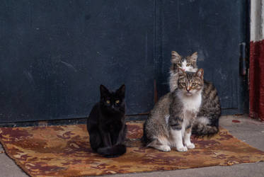 Gang of cats II by erynrandir