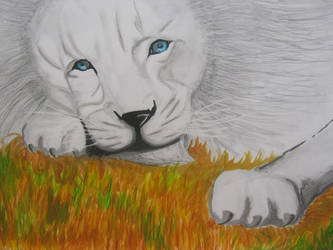 White Lion by AllyMeyer