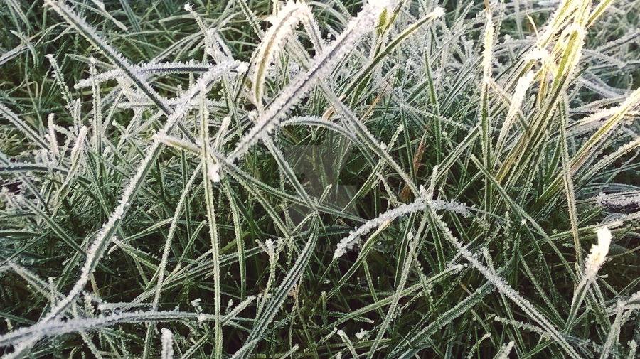 morning frost 31 by ARAart