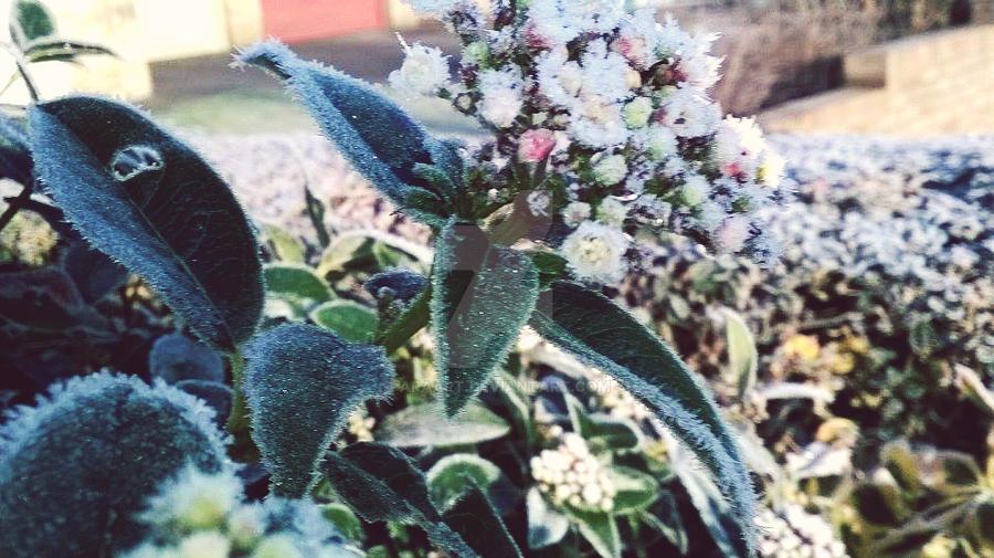 morning frost 34 by ARAart