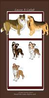 Lassie X Calub - Sheetland Sheepdog litter - CLOSE