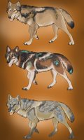 Tribal coyotes auction - CLOSED