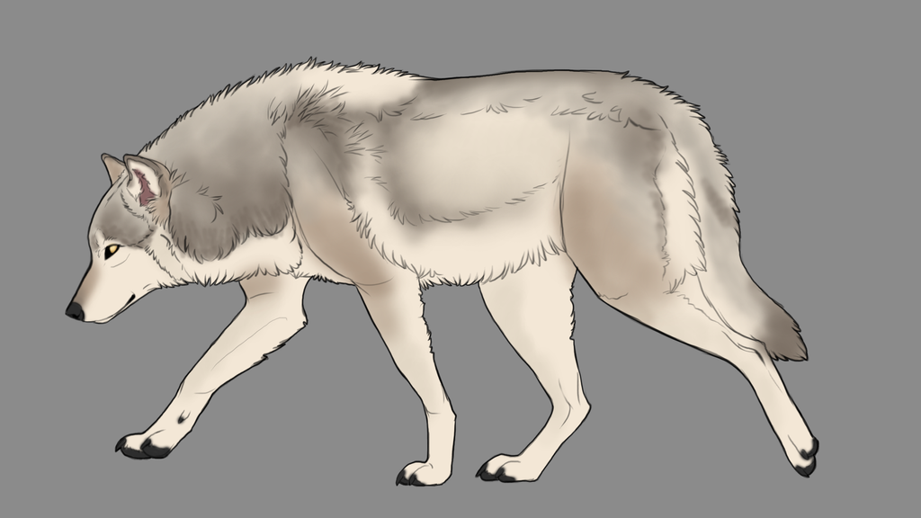 Natural wolf or canine auction 11 [OPEN] by ForeignFrontierRanch
