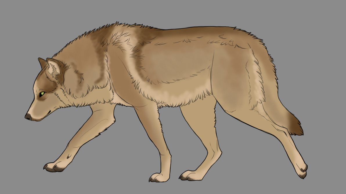 Natural wolf or canine auction 12 [CLOSED] by ForeignFrontierRanch
