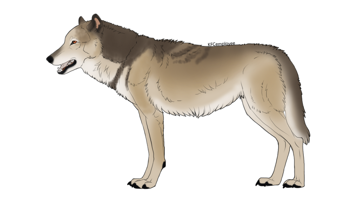 Natural wolf auction 13 [OPEN] by ForeignFrontierRanch