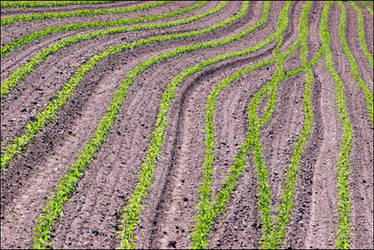 A well-organized field by maono