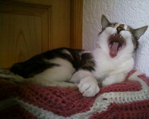 Yawning...