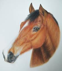Realistic horse