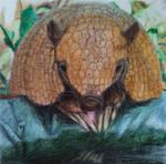Armadillo (Euphractus sexcinctus) by DoraDraw