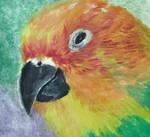 Bird rainbow by DoraDraw