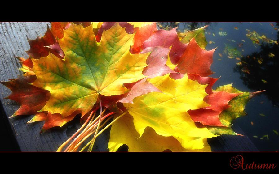 Seasons: Autumn by KRi5S