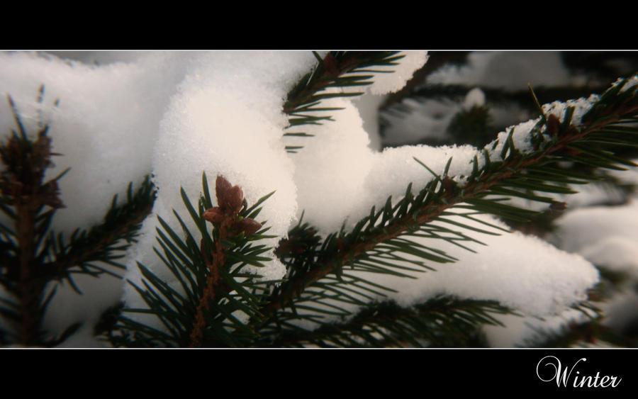 Seasons: Winter by KRi5S