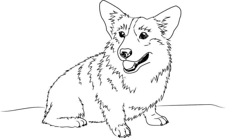 Welsh Ci Sketch by shango266