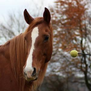 pony-pie's Profile Picture