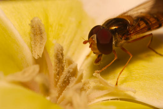 Hoverfly - 02