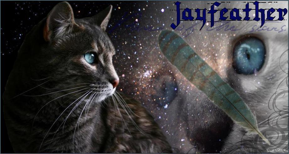 gallery for warrior cats wallpaper jayfeather