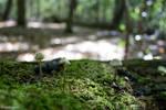 mushrooms on moss