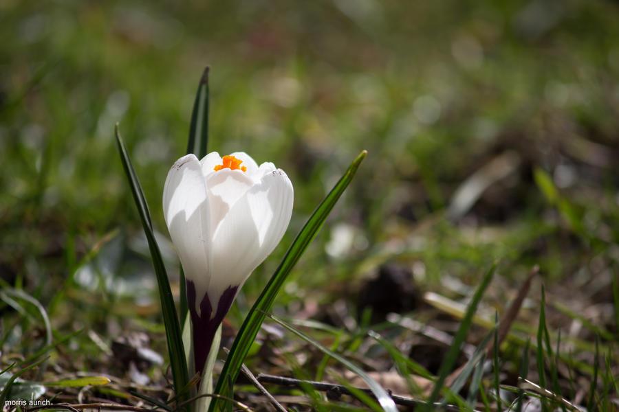 Single white flower by blacky mo on deviantart single white flower by blacky mo mightylinksfo