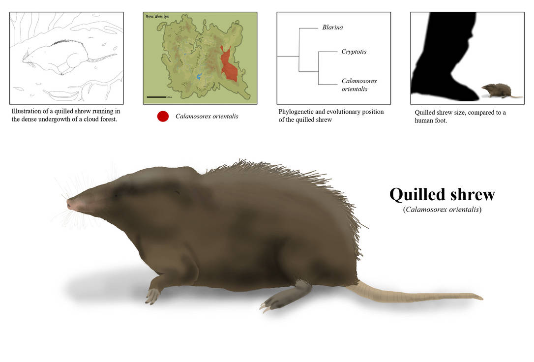 The Quilled Shrew of Maple-White Land