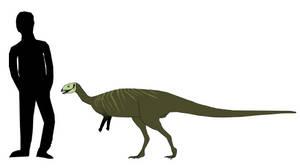 Dryosaurus elderae