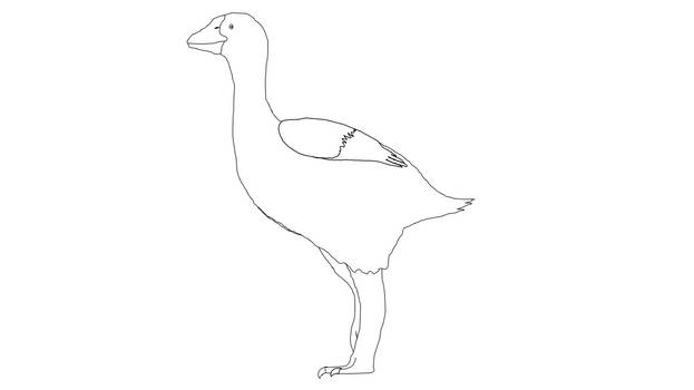 Lineart (Simple) - Giant rainforest goose
