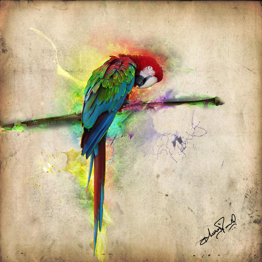 parrot...photoshop creativity by DParwal