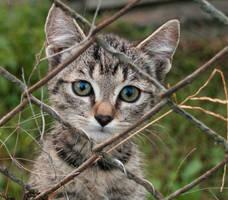Little kitty :D by Steveewonder
