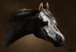 Equine Tranquillity